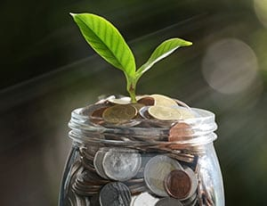 plant growing out of pot of money